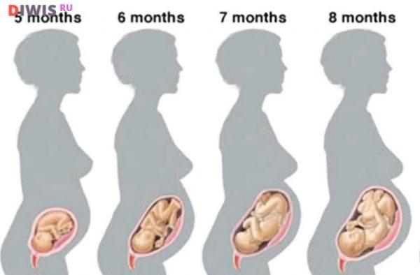 Беременность от зачатия до родов - всё, что следует Вам знать